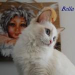 bella8