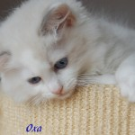oxa082014