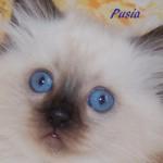 Pusia-102014-2