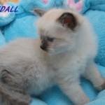 Randall-032015-4