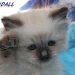 Randall-032015-5