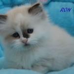 Ron-032015-5