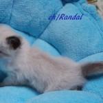 randal-032015-2