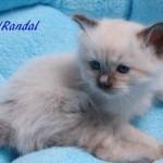 randal-032015-3