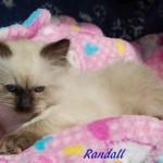 randall-042015-4