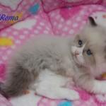 roma-032015-1