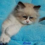 roma-042015-6
