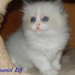 TAURIEL-052015-3