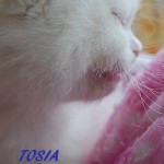 TOSIA-052015-4
