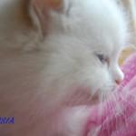 TOSIA-052015-5
