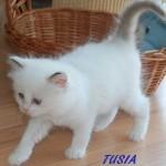 TUSIA-052015-4