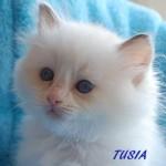 TUSIA-052015-5