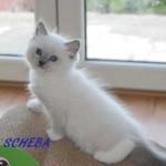 sheba-052015-1