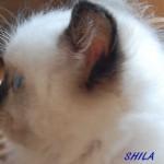 shila-062015-1