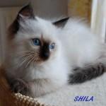 shila-062015-3