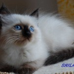 shila-062015-4