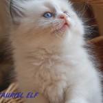 tauriel-062015-1