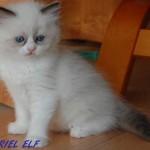 tauriel-062015-2