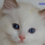 tosia-062015-4
