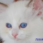 tusia-062015-3