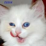 tusia-062015-4