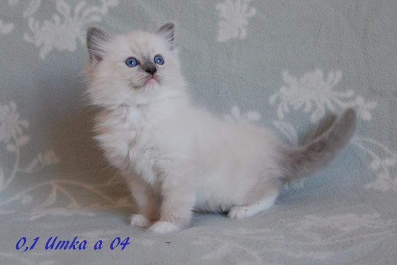 Umka-092015