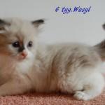 wasyl-092015-2