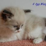 wasyl-092015-3