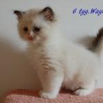 wayne-092015-2
