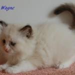 wayne-092015-3