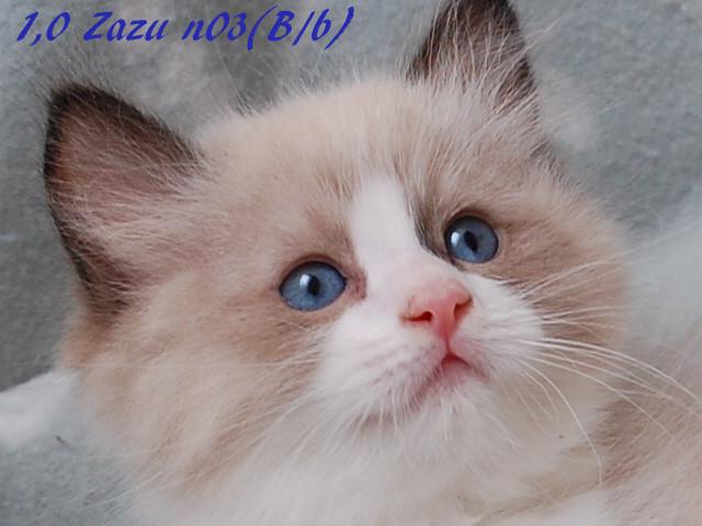 zazu-062016-3