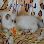 Zak-082016-3