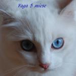 Yaga-022017-6