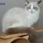 dusia_082017-2