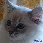 emi-102017-1
