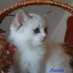 Foczka-112017-1